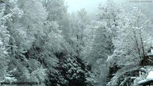 Bosco incantato in valle Vigezzo