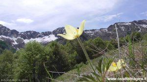 Alpe al Cedo