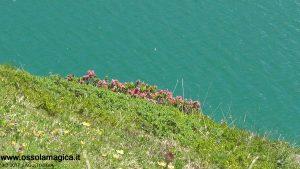 Rododendri al lago Toggia