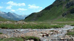 Alpe Bettelmat