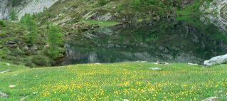 Lago Paione inf.
