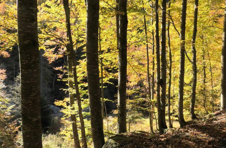 Autunno, tempo di foliage (ottobre 2020)