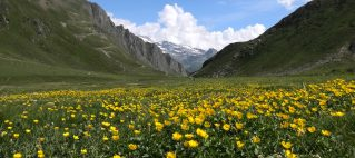 Dal lago di Morasco all'alpe Bettelmat (luglio 2021)